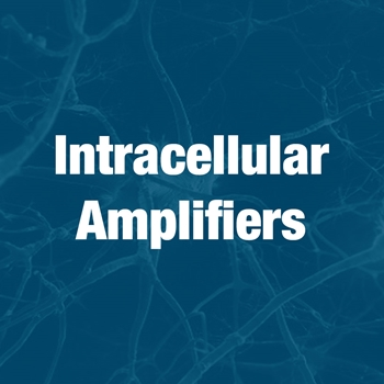 Intracellular Amplifiers